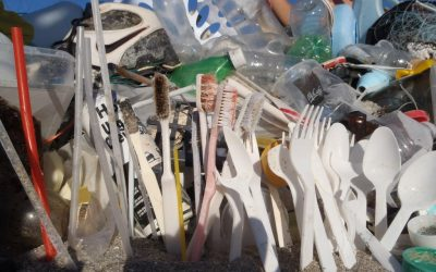 Move away from disposable: cutlery and plates